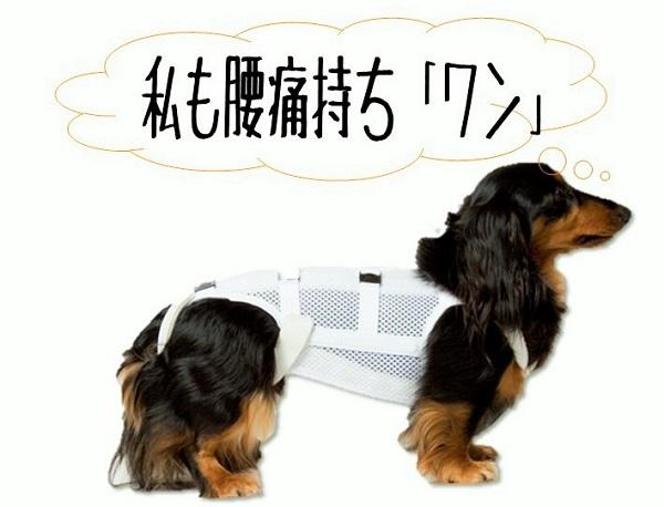 腰痛 犬.jpg